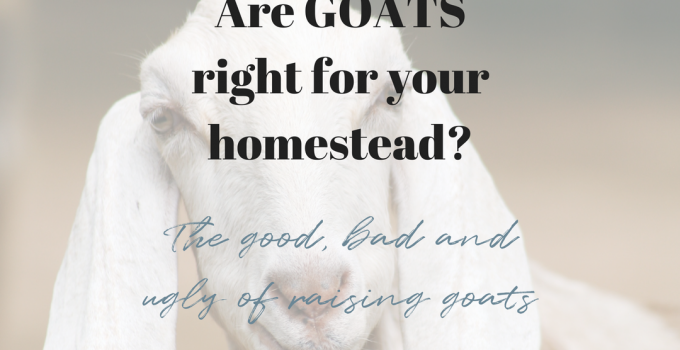 You GOAT to be kidding me!